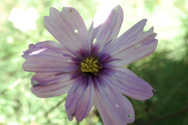 Weathered Violet