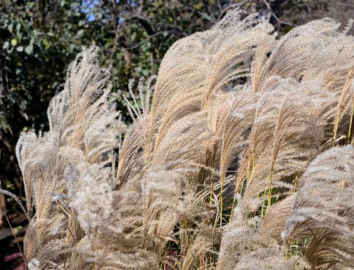 Wind Blowing Through The Grass