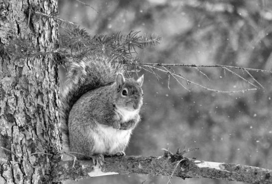 Squirrel Photo by Clarence Holm