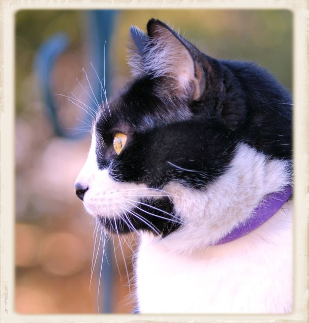 Charles (The Cat) 3/14/2015 a Photo - Clarence Holm