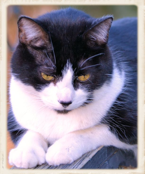 Charles (The Cat) 3/14/2015 Photo - Clarence Holm