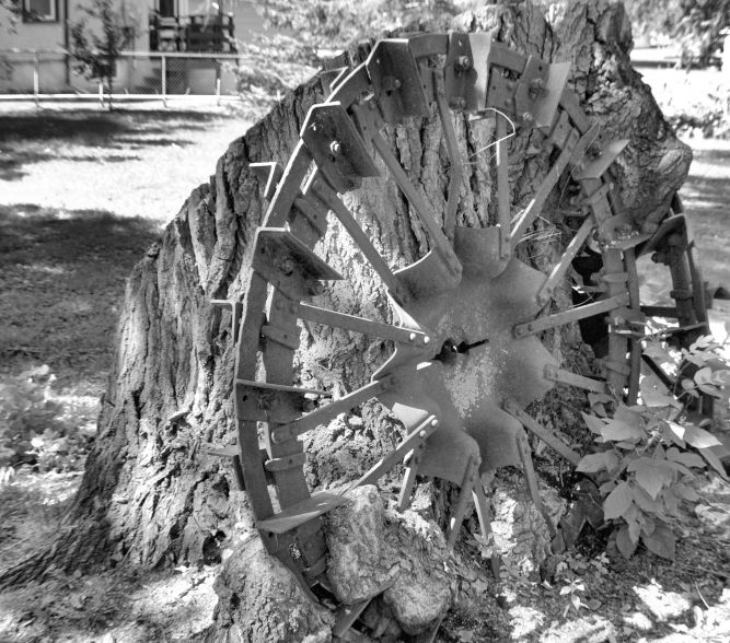 Tractor Wheels Grown Into Tree Photo - Clarence Holm 7/25/2015 - Delano, MN