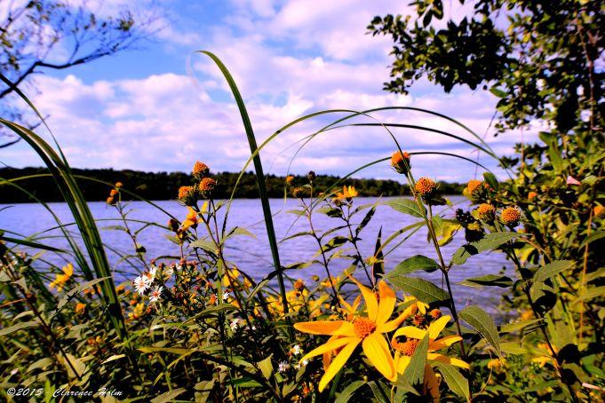 Lake Rebecca, Minnesota 9/8/2015