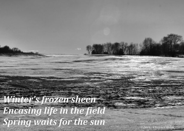 Winter's frozen sheen