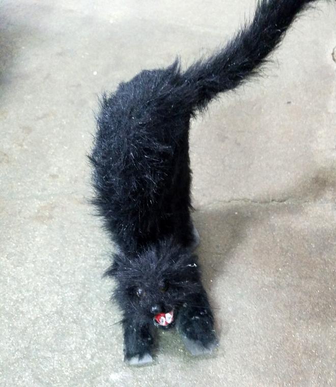 fake-cat