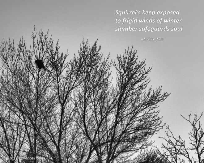 Squirrels Keep