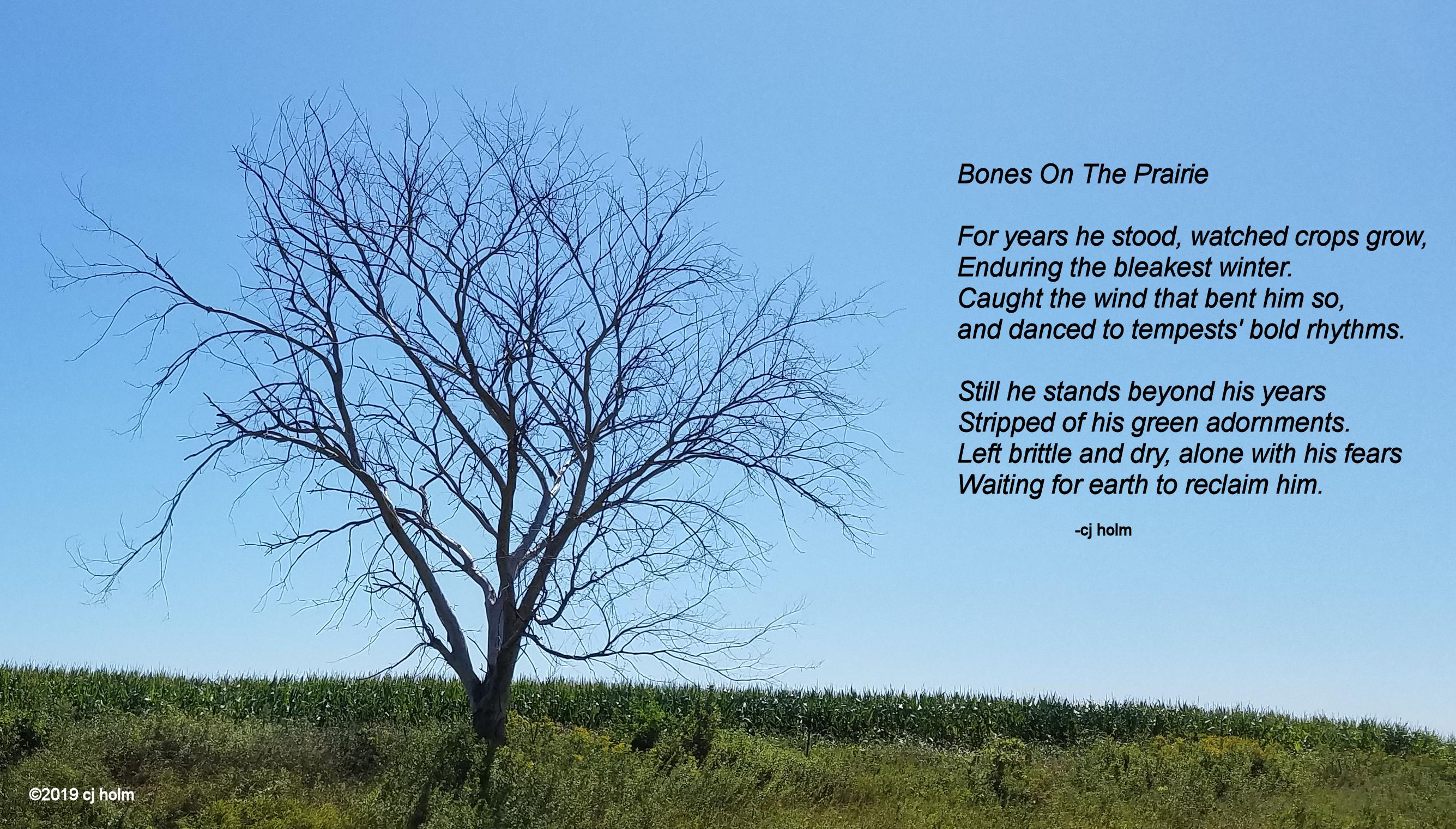 dead tree ab