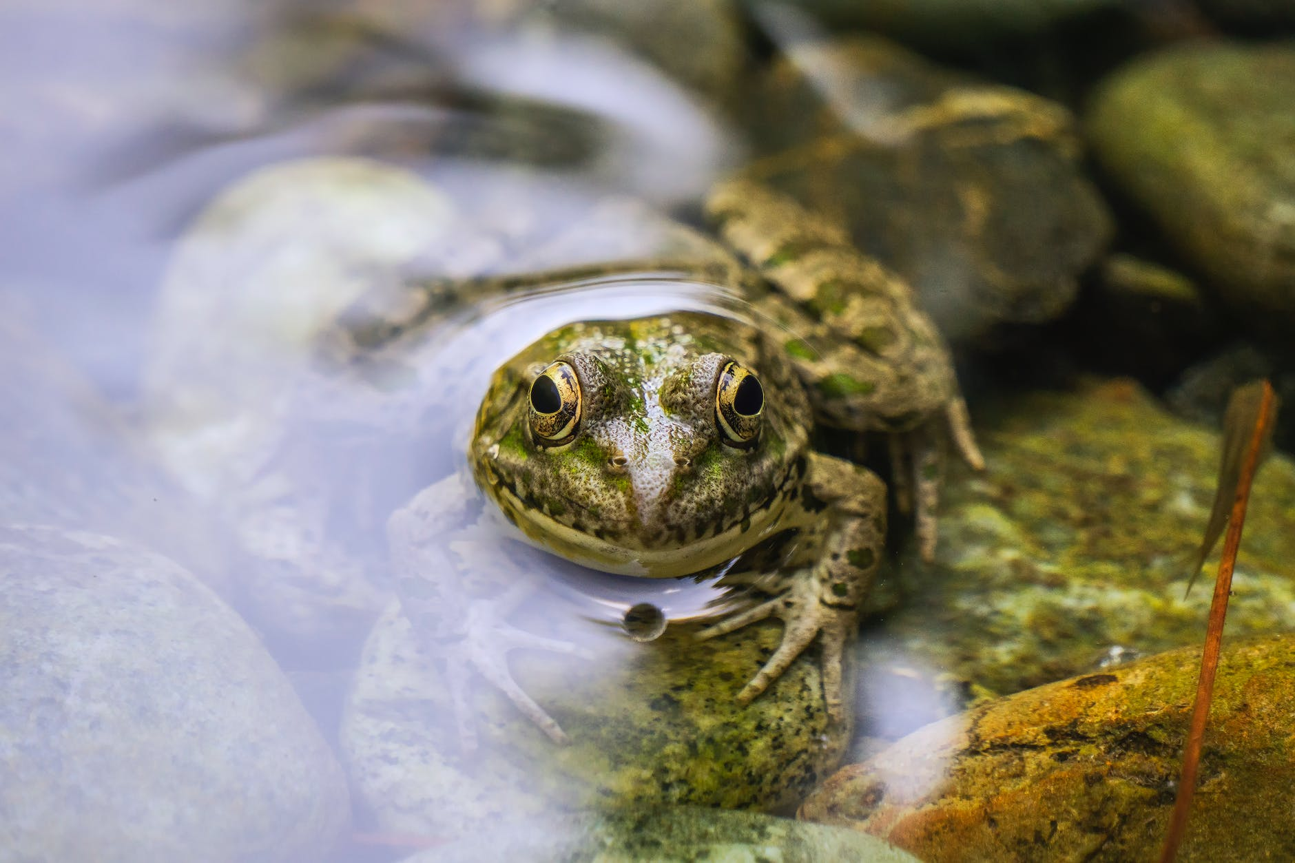 shallow focus photo of green frog