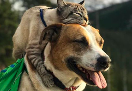 cat-and-dog-featured